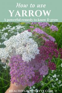 Yarrow Uses ~ Easy-to-grow yarrow has numerous medicinal uses inside and out, plus it's a beautiful and eco-friendly garden plant. Find out how to use yarrow for cuts, fevers, and more! #medicinalplants #yarrowbenefits #herbalremedies #xeriscaping #pollinatorfriendlygardening #medicinalplants #naturalremedies #plantmedicine