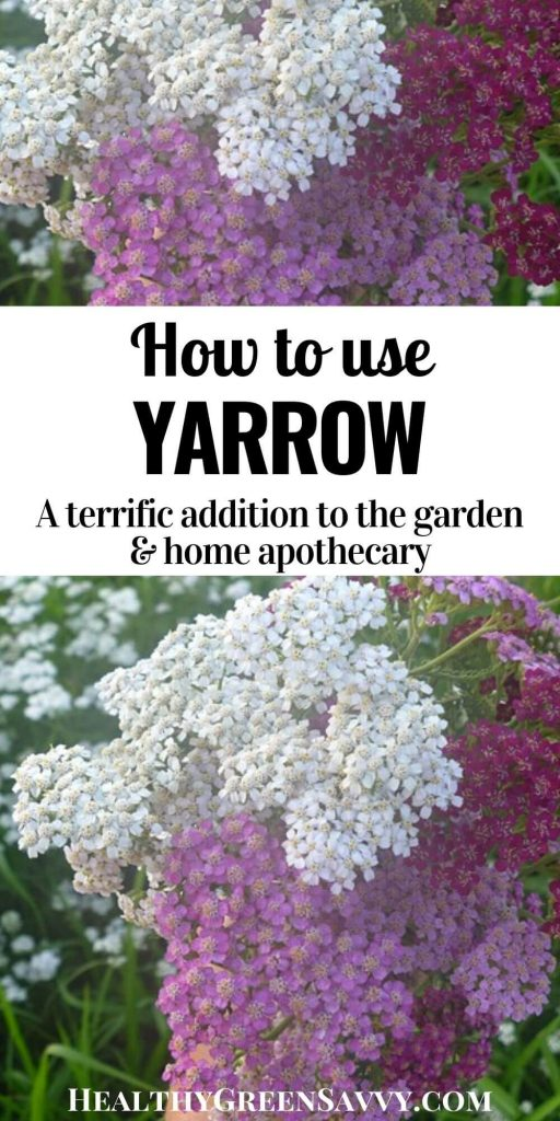 pin with image of yarrow flowers and title text