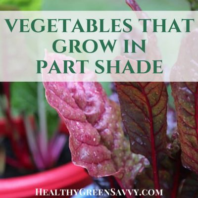 Did you know there are vegetables that grow in shade? If you have a less unny garden, these 45+ crops could help you grow more food this season. #gardeningtips #shadegarden #vegetablegrowing #ediblelandscaping