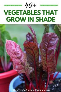 Did you know there are vegetables that grow in shade? If you have a less sunny garden, these 45+ crops could help you grow more food this season. #gardeningtips #shadegarden #vegetablegrowing #ediblelandscaping #garden #vegetablegarden