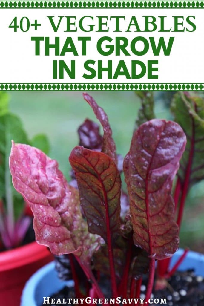 pin with photos of chard growing in pots with title text