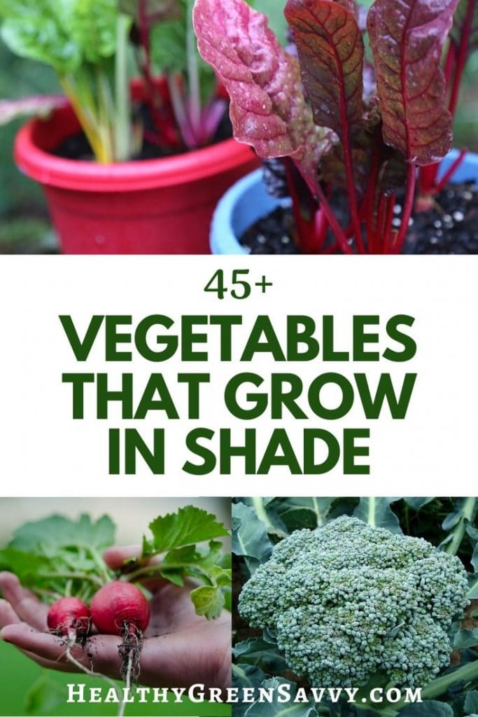 pin with photos of chard, radishes, and broccoli with title text