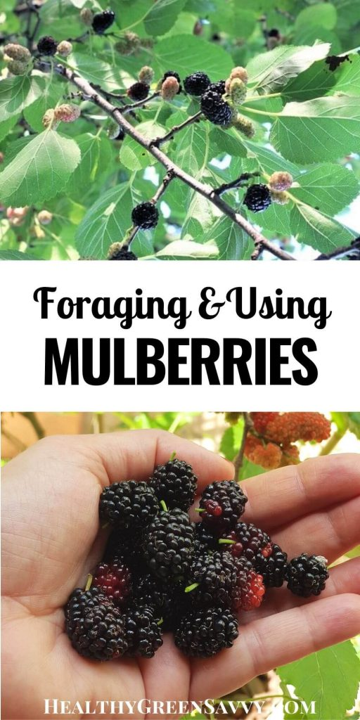 mulberry recipes pin with title text and photos of handful of mulberries, mulberries growing on tree