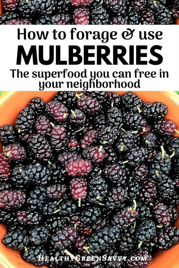 mulberry recipes pin with photo of bowl of mulberries and title text