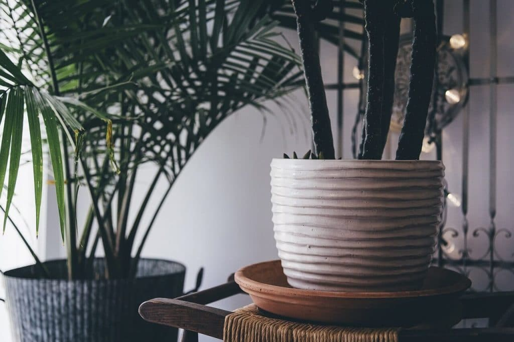 Best Plants for Cleaning Indoor Air -- photo of potted palms