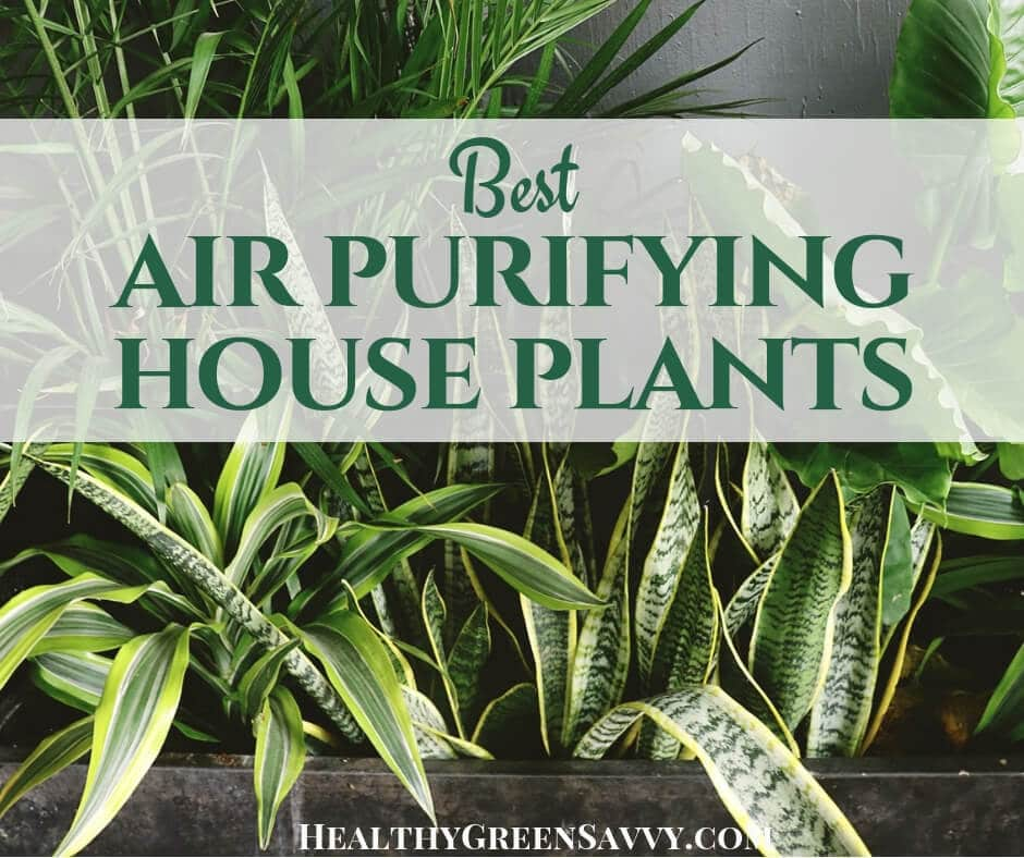 Best Plants for Cleaning Indoor Air -- Photo of houseplants with title text overlay