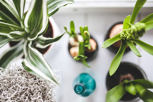 Best Plants for Cleaning Indoor Air -- photo of several houseplants from above