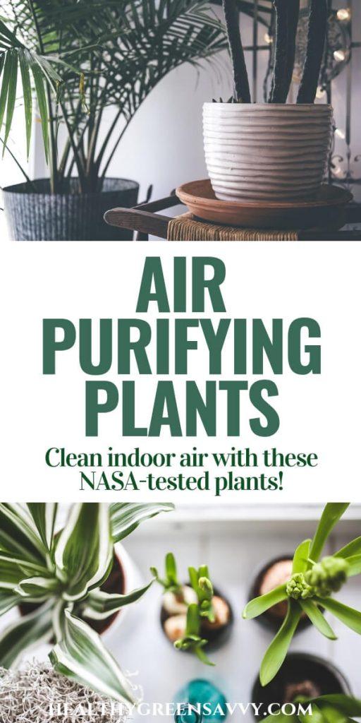 Best Plants for Cleaning Indoor Air -- Pin with photos of houseplants with title text