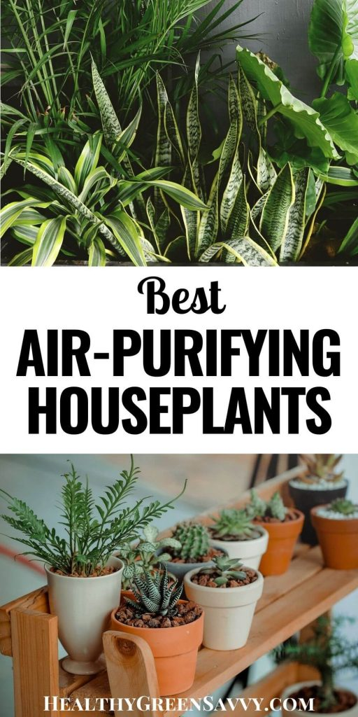Pin with title text and photos of air-purifying houseplants