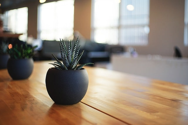 healthy home -- photo of plants on tabletop