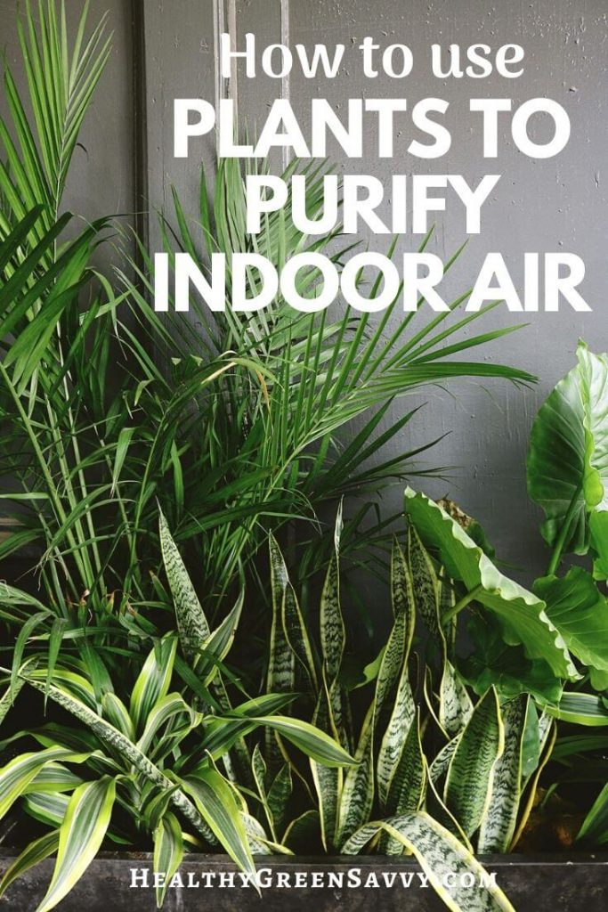 pin with photo of plants that clean indoor air with title text overlay