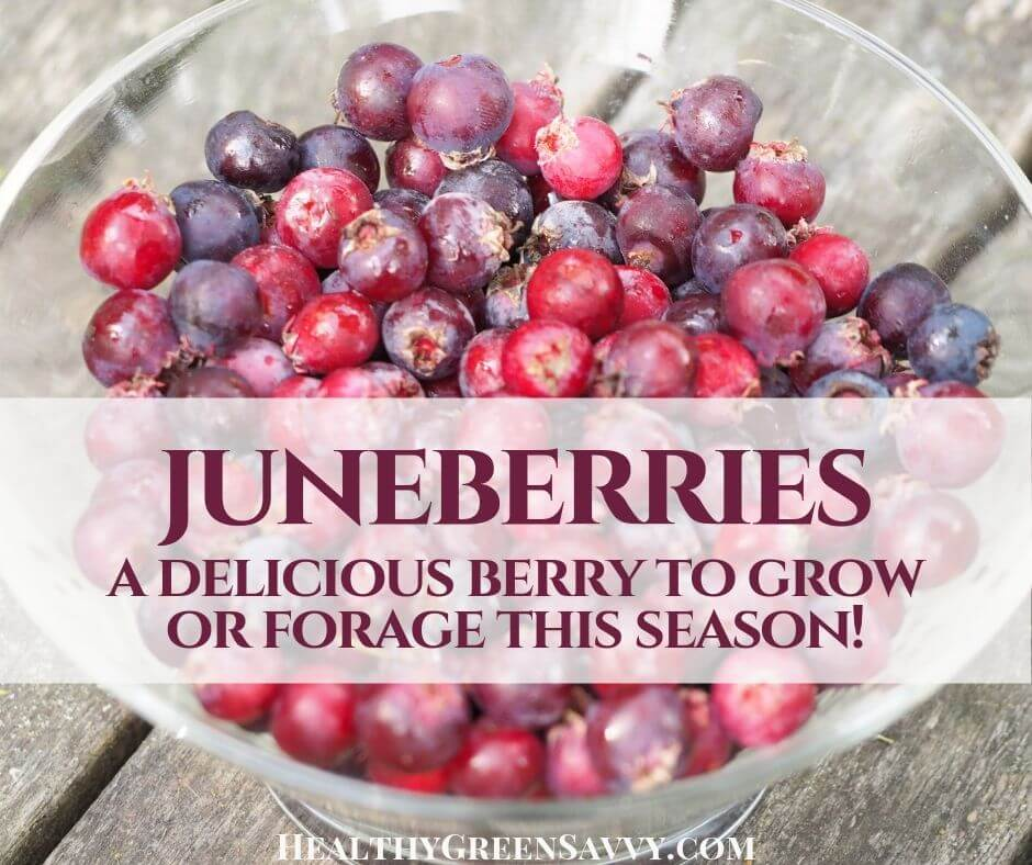 The Best Foraged Berry You've Never Heard Of