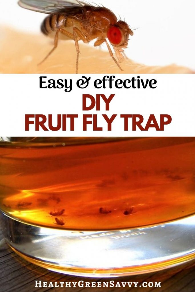 pin with title text and photos of fruit fly and homemade fruit fly trap