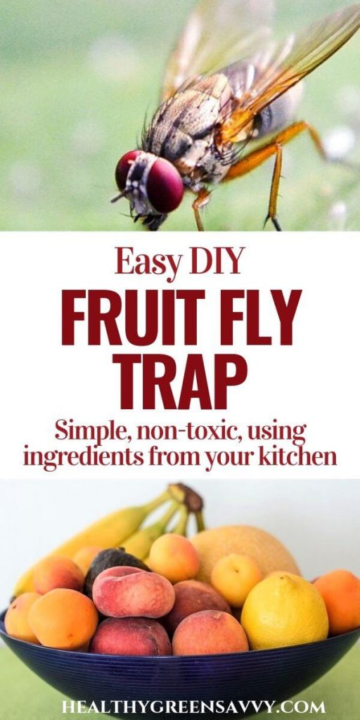 pin with photos of fruit fly and fruit bowl with title text