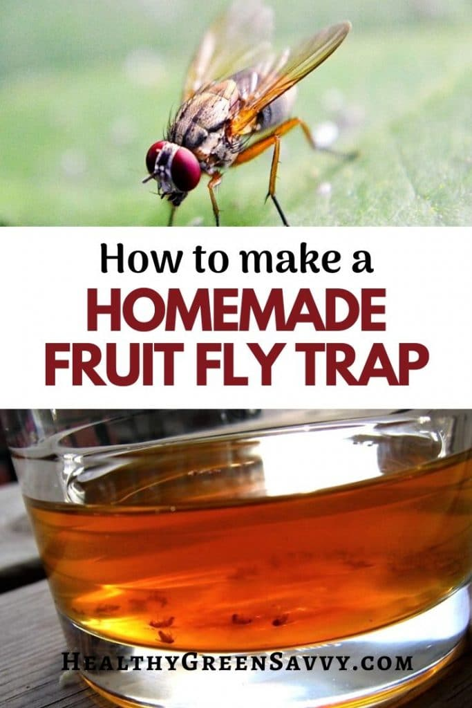 pin with photos of fruit fly and cup of vinegar with title text