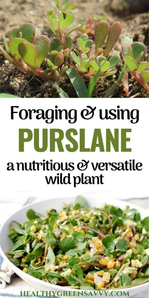 verdolaga purslane recipes pin with title text and photos of purslane growing and in salad recipe