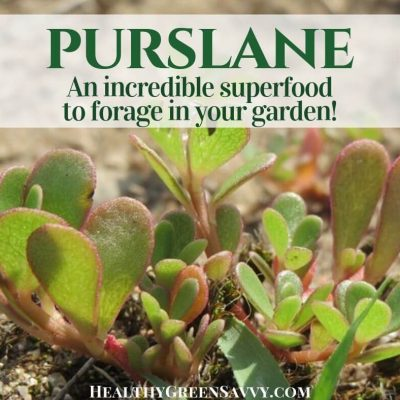 verdolaga purslane recipes pin with photos of purslane growing with title text overlay