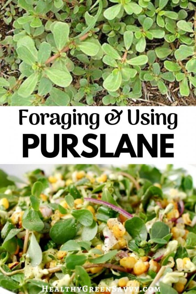verdolaga purslane recipes pin with photos of purslane growing and in salad with title text