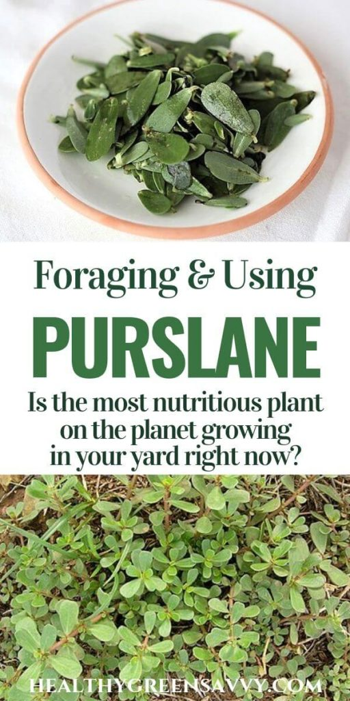 verdolaga purslane recipes pin with photos of purslane growing and in bowl with title text