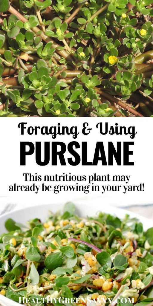 pin with title text and photos of purslane growing and in salad