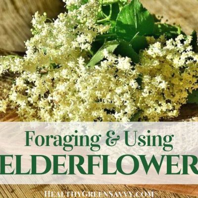 cover photo of elderflowers with title text overlay
