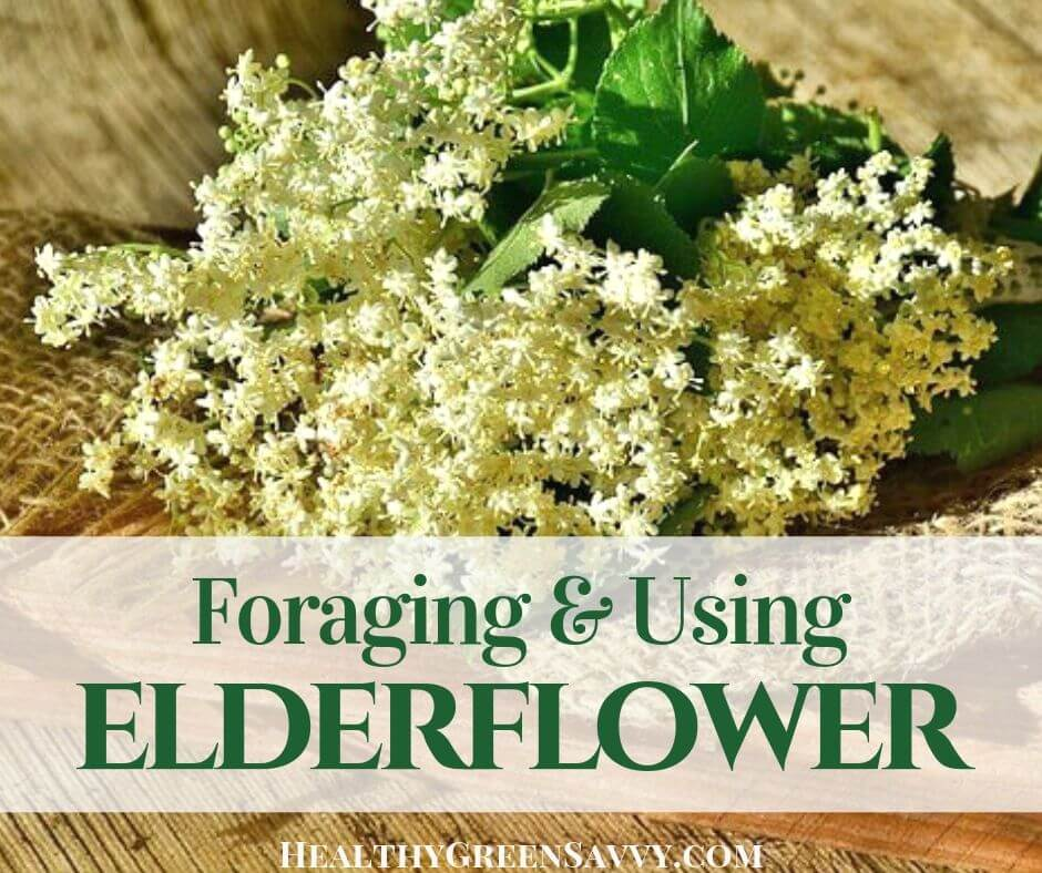 How to find elderflower growing near you & what to do with it