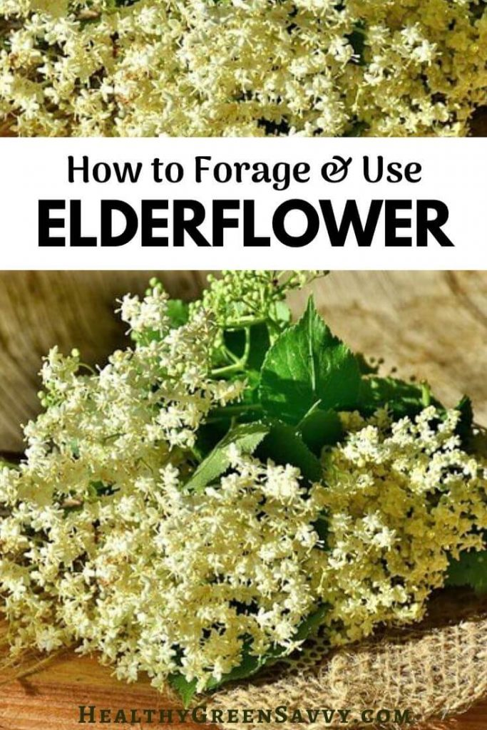 pin with photo of elderflowers and title text