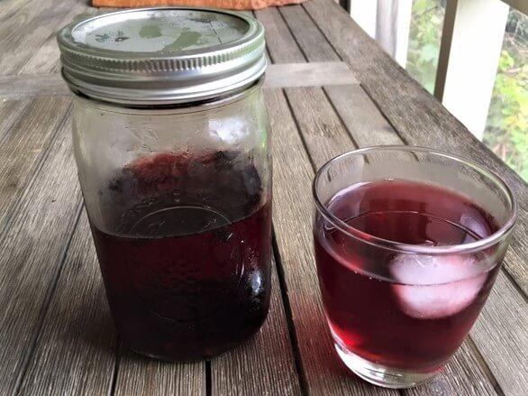 photo of brewed hibiscus sun tea