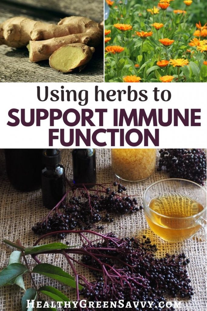 pin with title text and photos of herbs to boost the immune system: ginger, calendula, elderberry, and elderflower