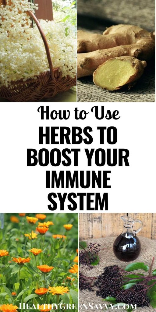 pin with photos of herbs to boost the immune system with title text overlay