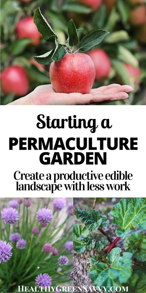 pin with title text and photos of permaculture plants apple tree, chives, and rhubarb