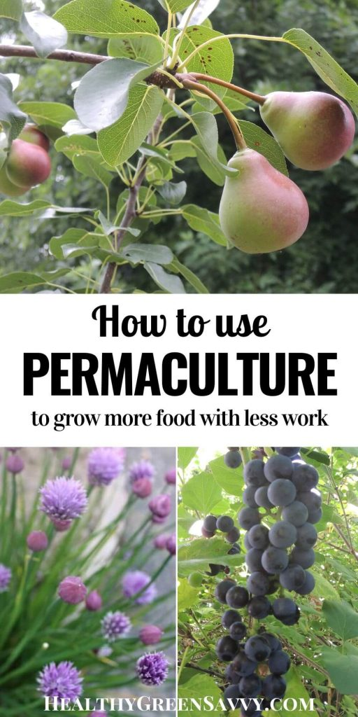 pin with title text and photos of permaculture garden plants pears, chives, grapes