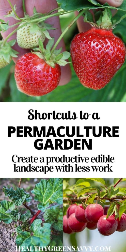 pin with title text and photos of permaculture plants strawberries, rhubarb, and plums