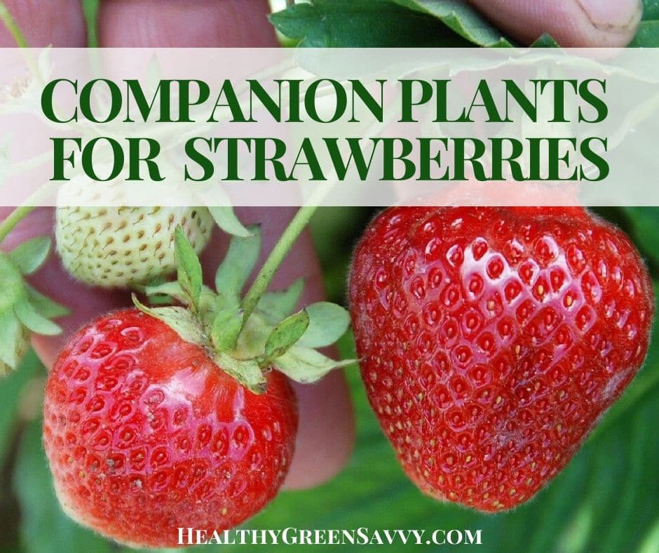 cover photo of strawberry plants with title text overlay