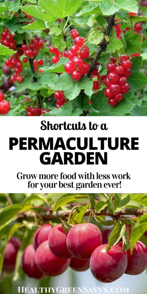 pin with photos of permaculture plants, red currants and plums, with title text