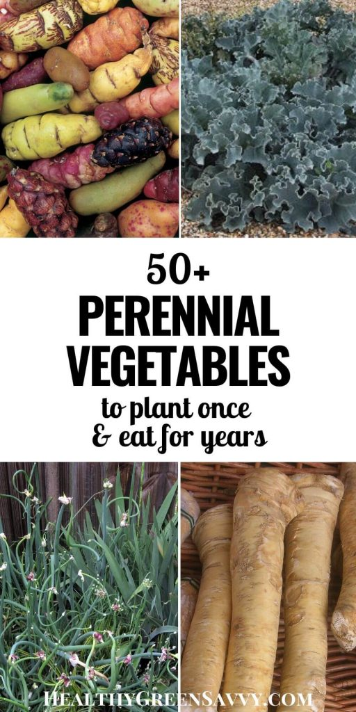 pin with photos of perennial vegetables oca, seakale, walking onions and horseradish plus title text overlay