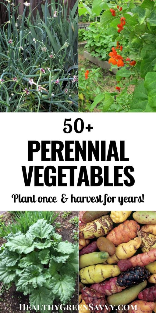 pin with title text and photos of perennial vegetables walking onions, scarlet runner beans, rhubarb, and oca