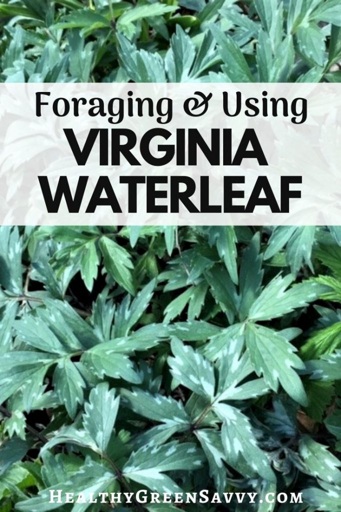 pin with photo of virginia waterleaf and title text