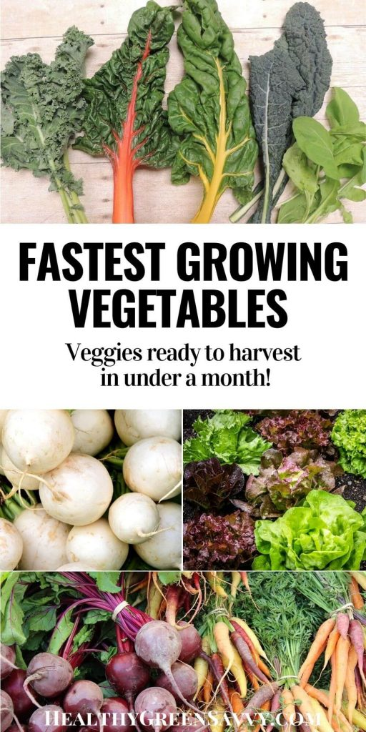pin with photos of fast growing vegetables: kale, chard, arugula, salad turnips, lettuce, carrots, and beets