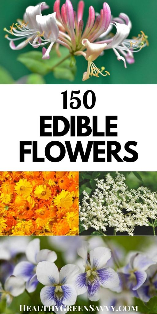 pin with title text and photos of several flowers you can eat: honeysuckle, calendula, elderflower, and violets, dandelion, and