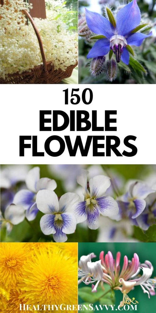 pin with title text and photos of several flowers you can eat: elderflower, borage, violets, dandelion, and honeysuckle