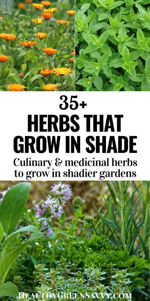 pin with title text and photos of calendula, mint, thyme, rosemary and other herbs that grow in shade