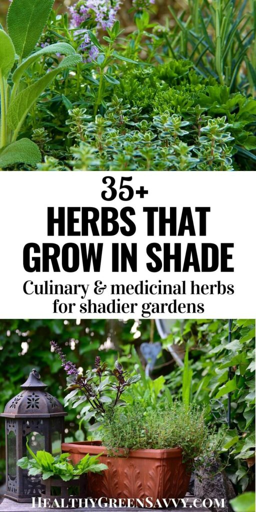 pin with title text and photos of herbs that grow in shade