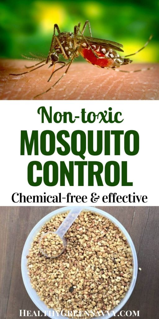 pin with title text and photos of mosquito and bucket of Brown Bread Mozzie natural mosquito control granules