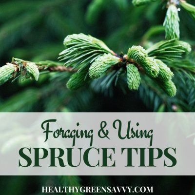cover photo of spruce tips growing with title text overlay