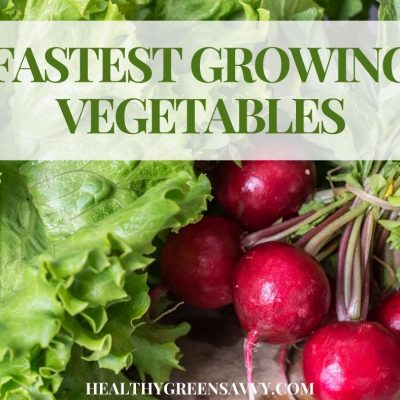 cover photo of lettuce and radishes with title text overlay