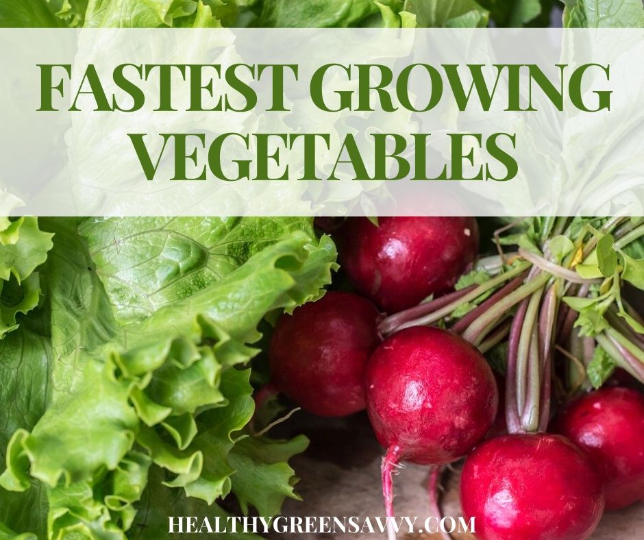 20+ Fast Growing Vegetables for Gardeners in a Hurry
