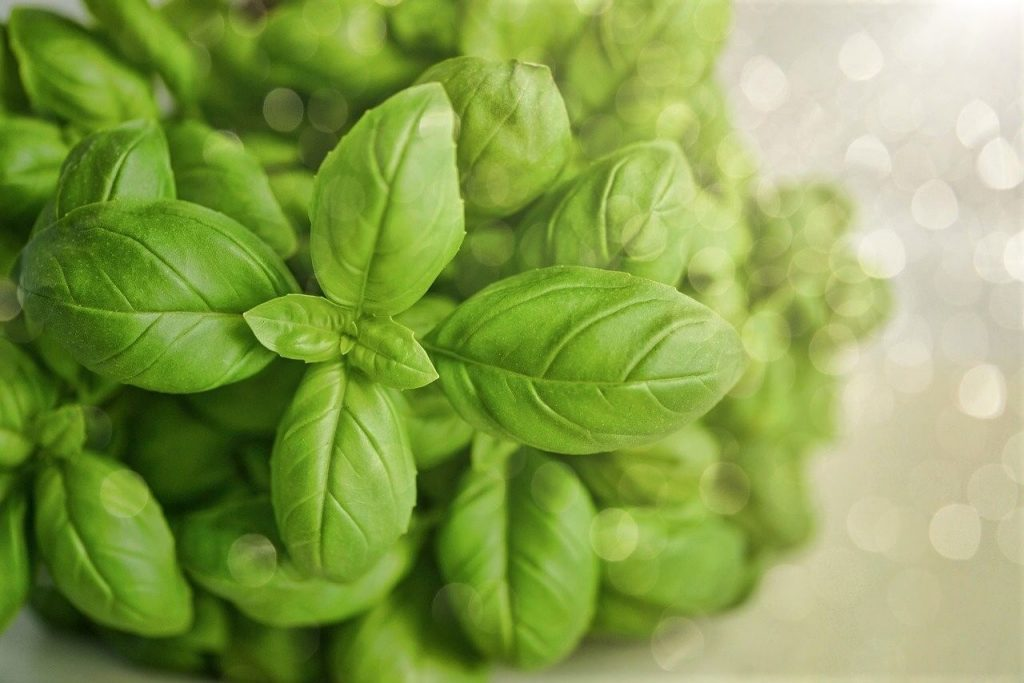 photo of basil leaves