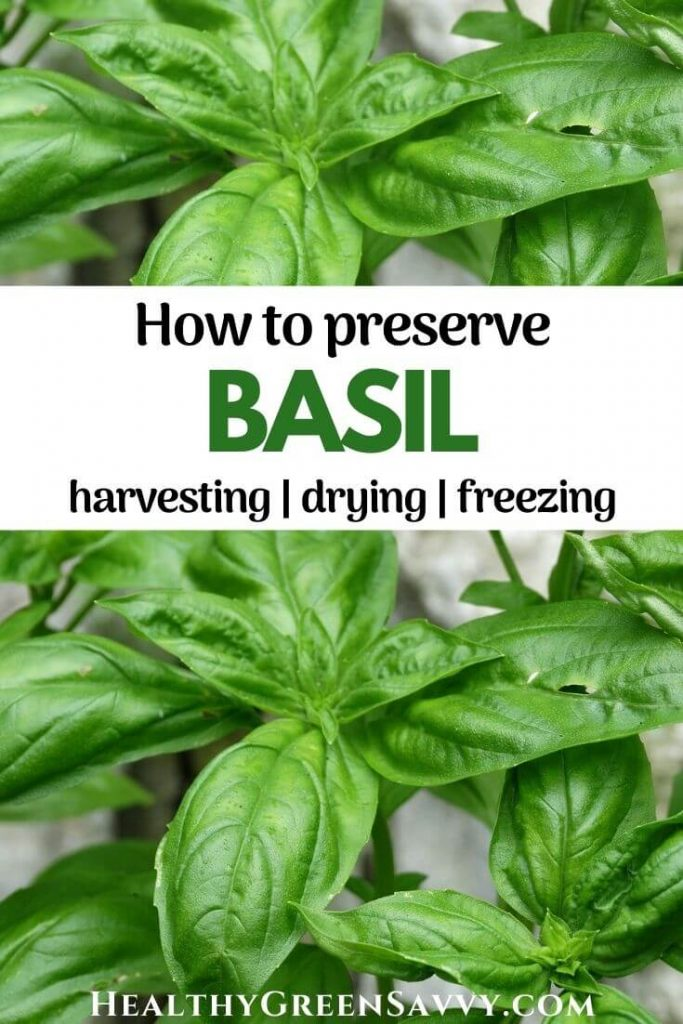 pin with photos of basil leaves plus title text