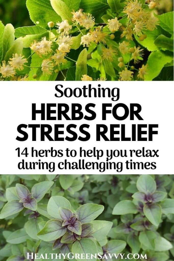 pin with photos of calming herbs for stress, linden and tulsi